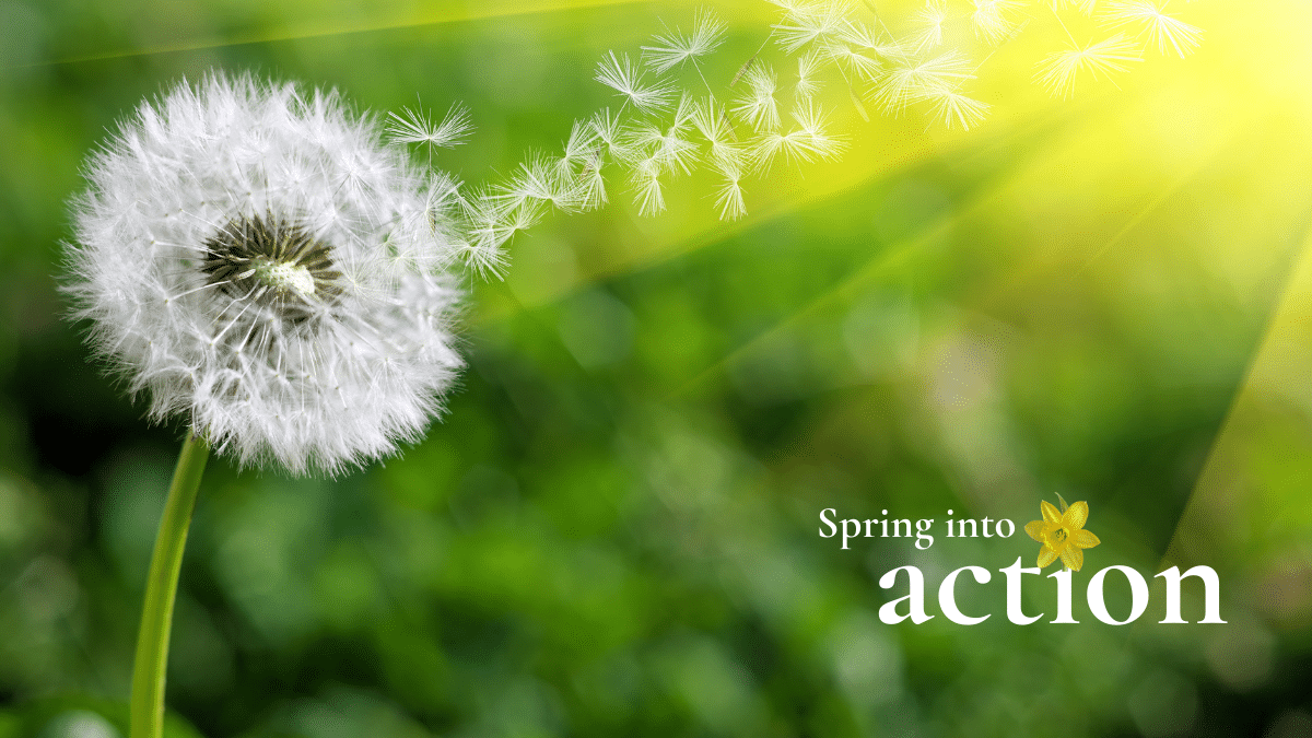 Want a bright new beginning this spring?